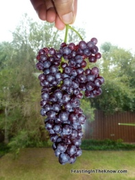 Black Corinth grapes