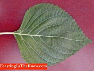 kaenip sesame leaf