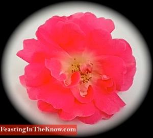 apple blossom b