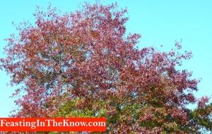 autumn tree scenery 1