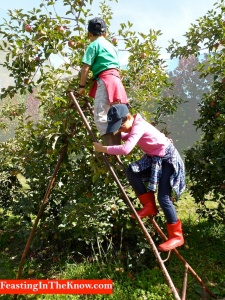 scaling the apple tree