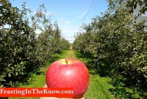 solo apple