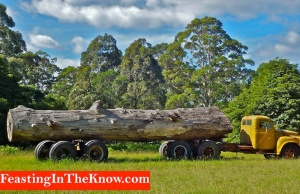 truck and log